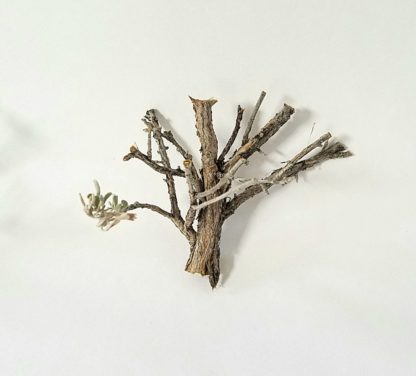 miniature model trees