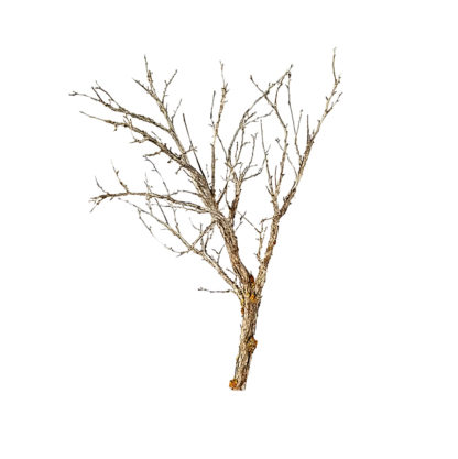 railway model tree armature