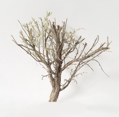 Model tree armature