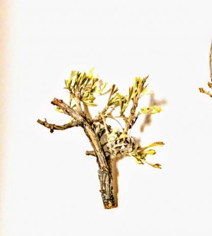 1 inche miniature model tree armature