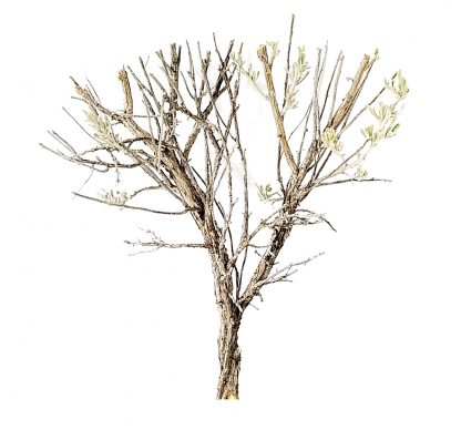 12 Inch Model Trees